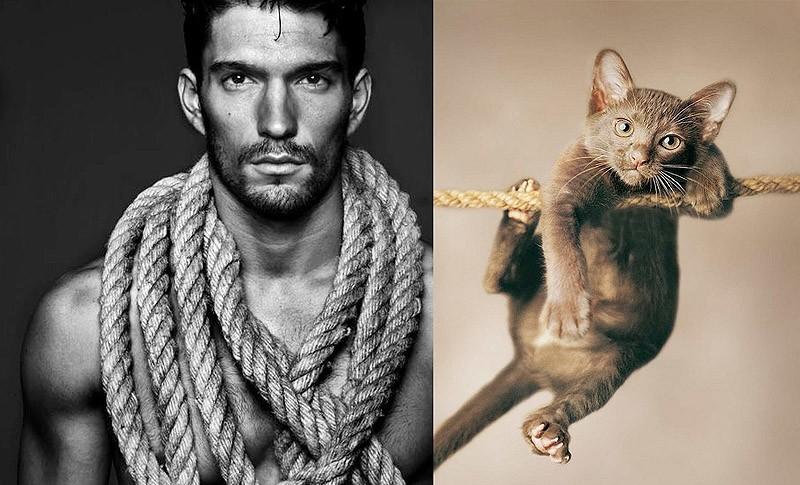 Модели vs Коты
