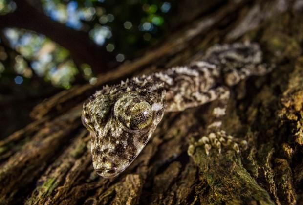 4 природных чуда, обнаруженные этой осенью