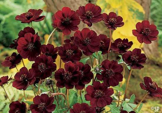10 невероятно редких цветов