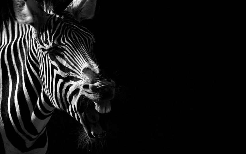 Портреты из зоопарка