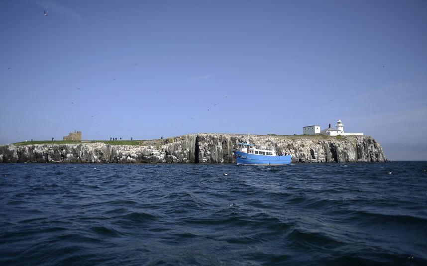 Острова Фарне: морские котики, тупики и бакланы