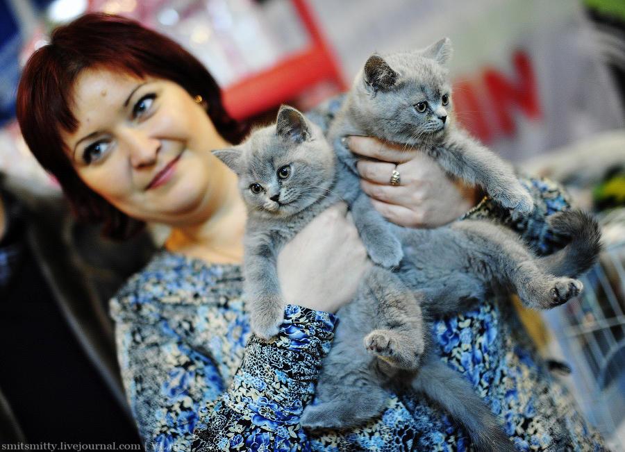 Выставка породистых кошек во Владивостоке