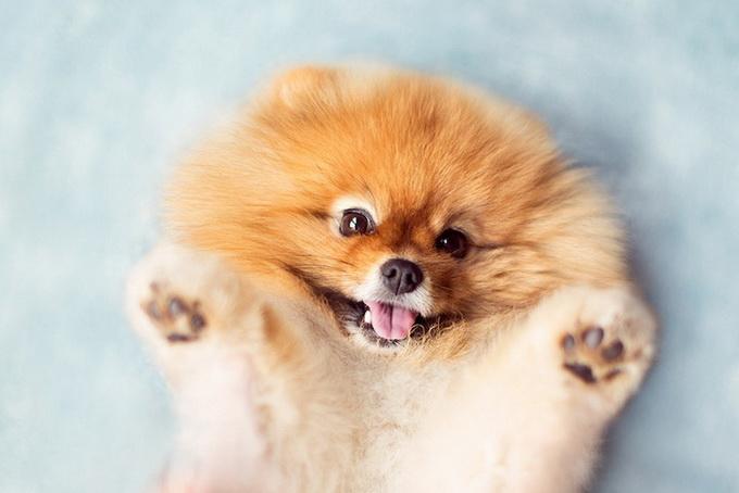 Собачка Флинт