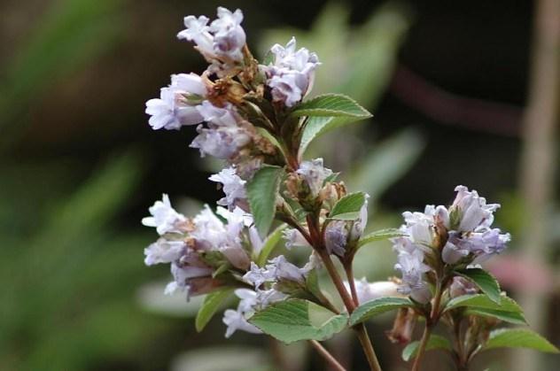 10 самых редкоцветущих растений
