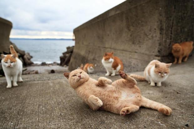 Кошки и пьедестал почета