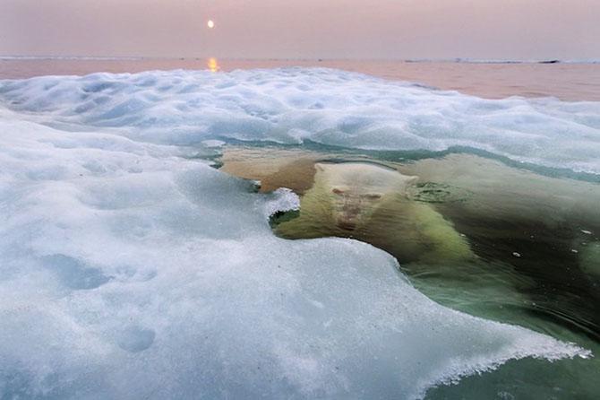 Все победители фотоконкурса «National Geographic Photo Contest 2013»