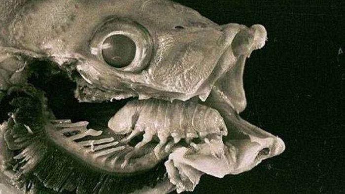 ТОП-25 самых опасных для жизни паразитов (25 фото)
