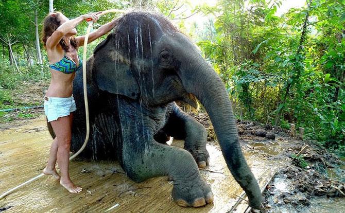 Работа мечты: как я мыла слона
