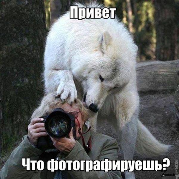 Позитивная фотоподборка