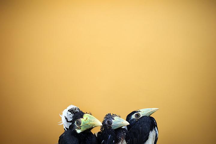 Фотографии смешных животных 2013 года
