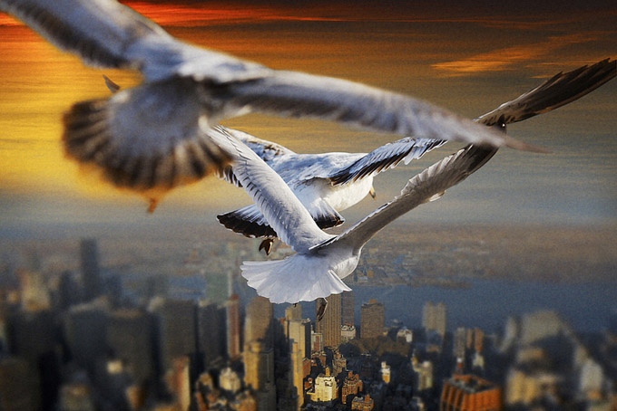 Гордый странник: мир с высоты птичьего полета