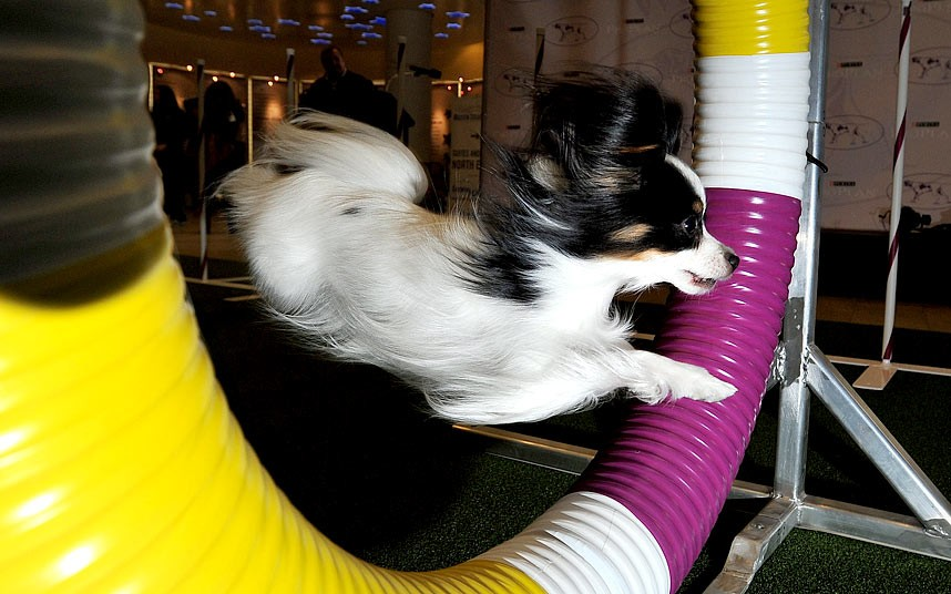 138-ая Вестминстерская выставка собак