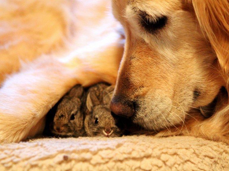 Усыновление в животном мире