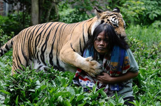 Мой лучший друг – тигр