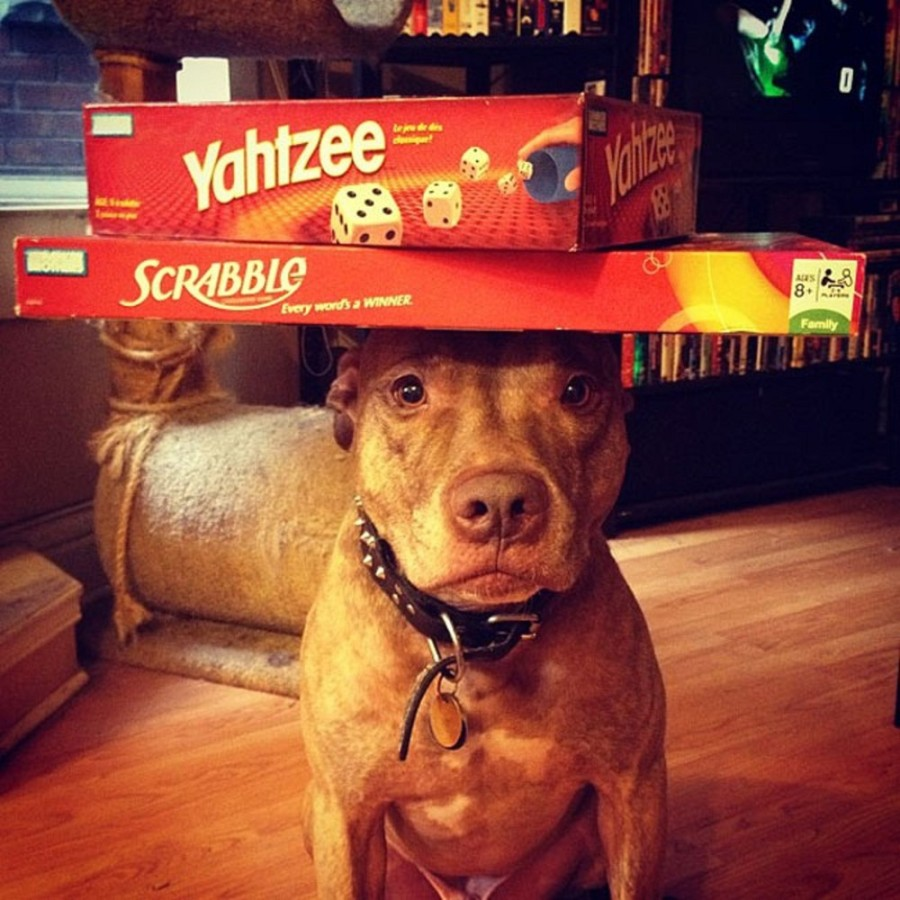 Предметы на голове собаки