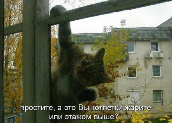 Голодный котэ