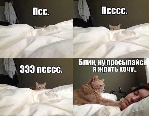 Просыпайся