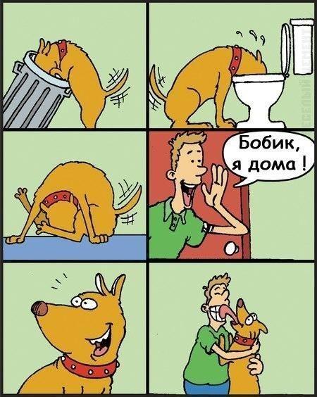 Бобик, я дома!