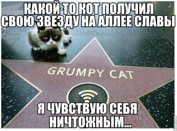 Какой то кот