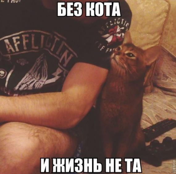 Без кота
