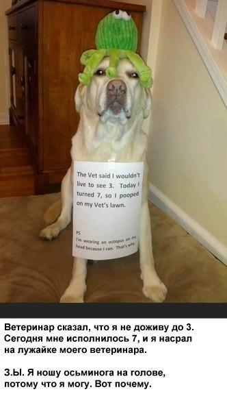 Ветеринар сказал...