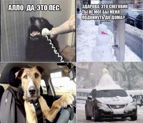 Алло. Да, это пес