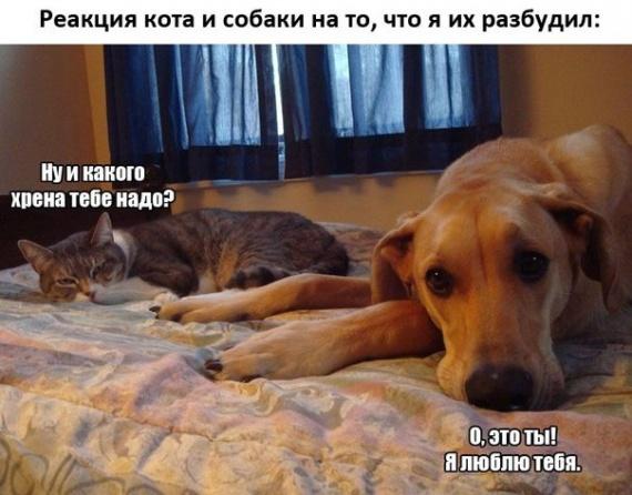 Реакция кота и собаки