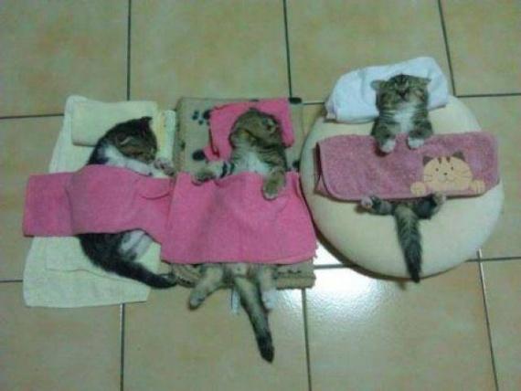 Котята спят в своих кроватках