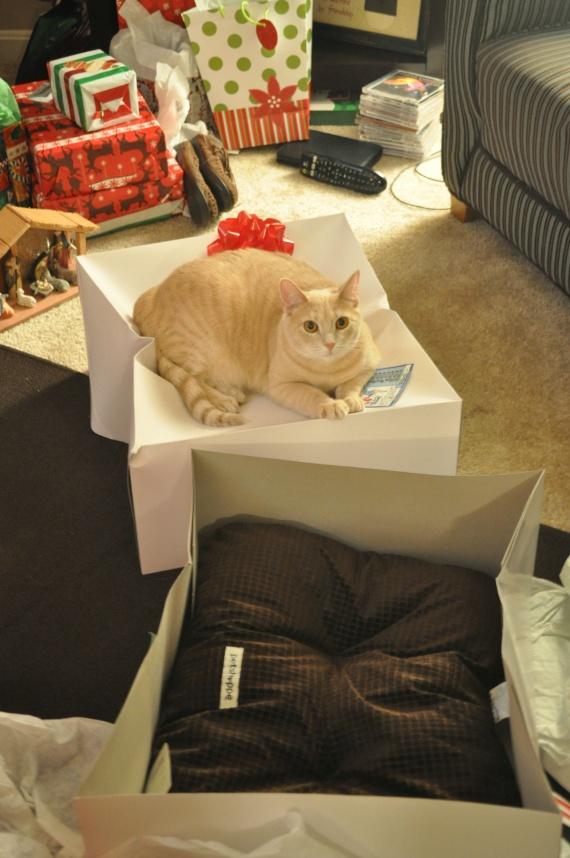 Подарил коту подушку на рождество