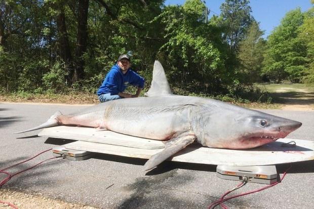 Американский рыбак поймал на удочку акулу весом 365 кг