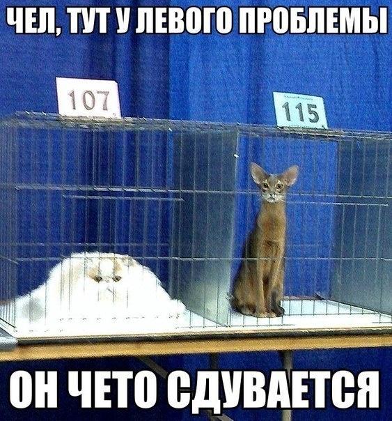 Кот сдулся