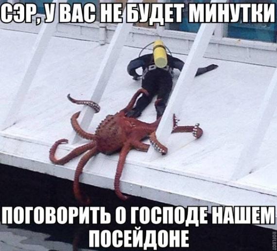 Поговори с осьминогом