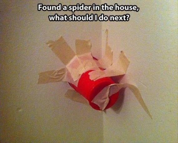 Я нашел паука дома, чё дальше делать???