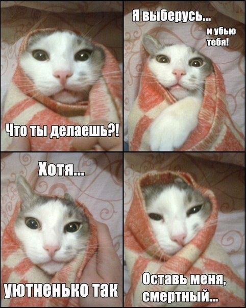 Кот в одеяле