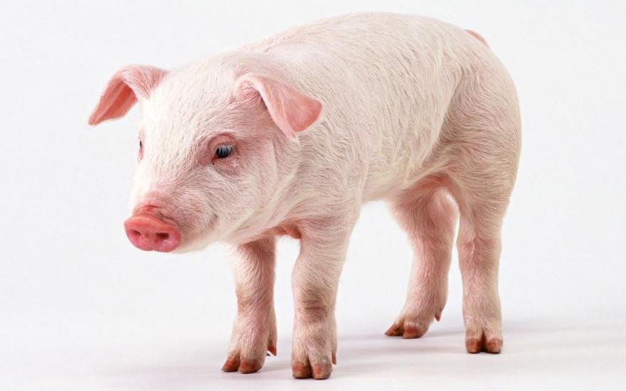 Топ 10 самых умных животных планеты