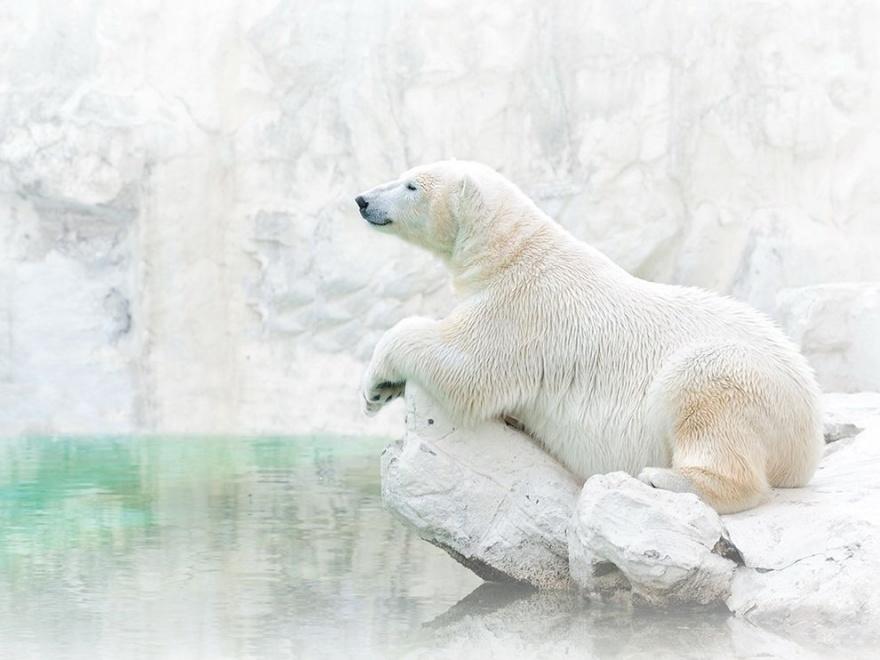 Лучшие фотографии National Geographic мая 2014