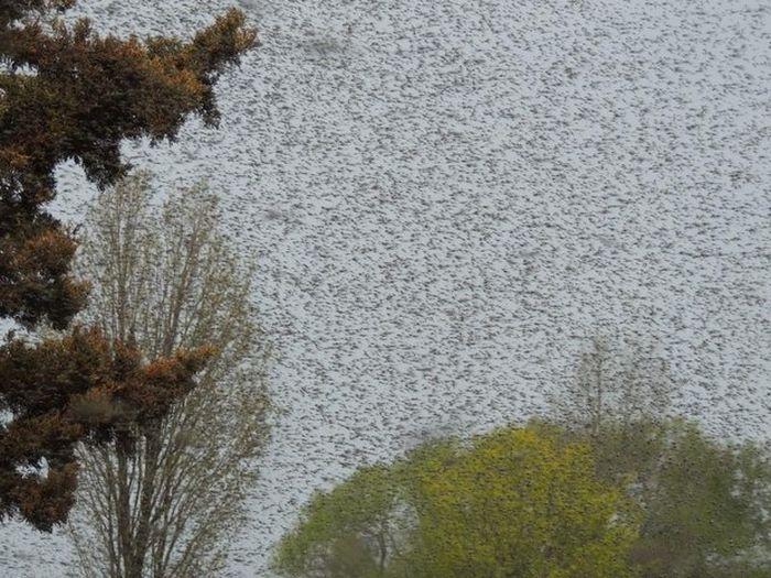Нашествие комаров (20 фото)