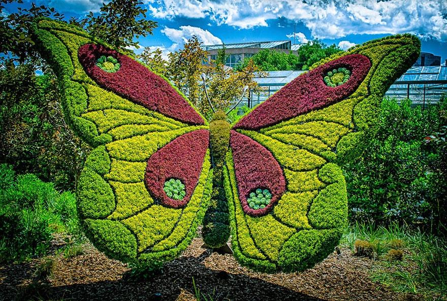Живые гиганты из Ботанического сада Атланты