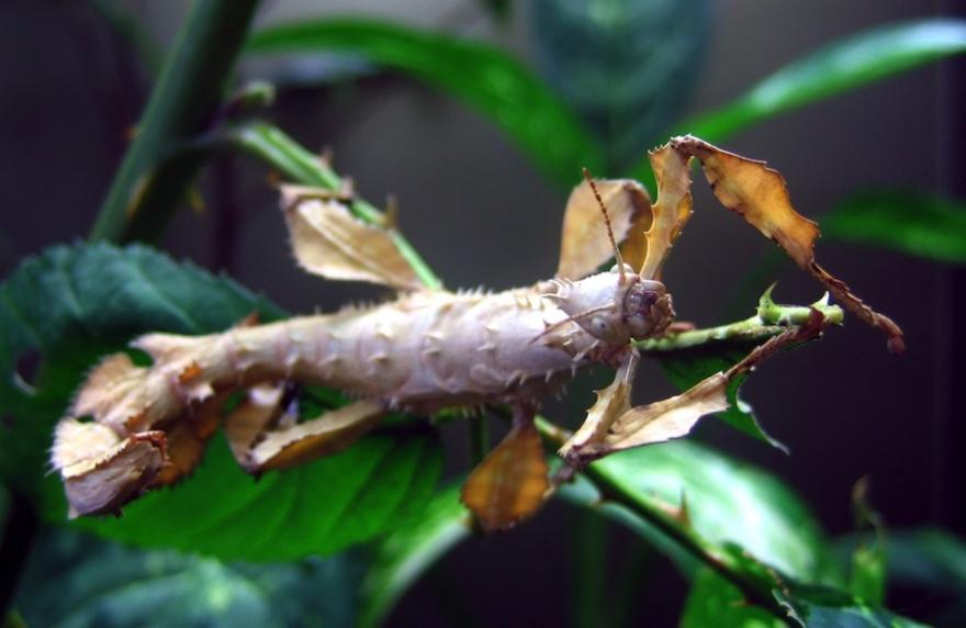 8 гигантских насекомых планеты
