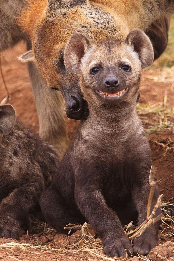 Улыбающиеся животные (23 фото)