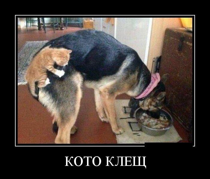 Демотиваторы 05.06.2014 (30 фото)