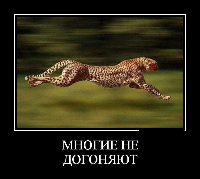 Демотиваторы 06.06.2014