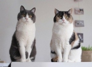 9 малоизвестных фактах о кошках