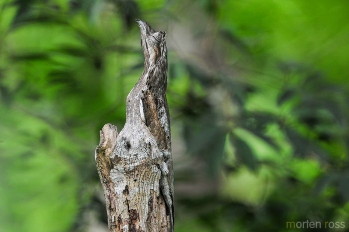 Чудесный природный камуфляж (38 фото)