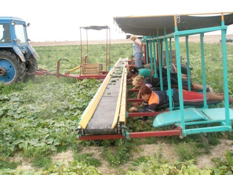 Инновационный комбайн по сбору огурцов