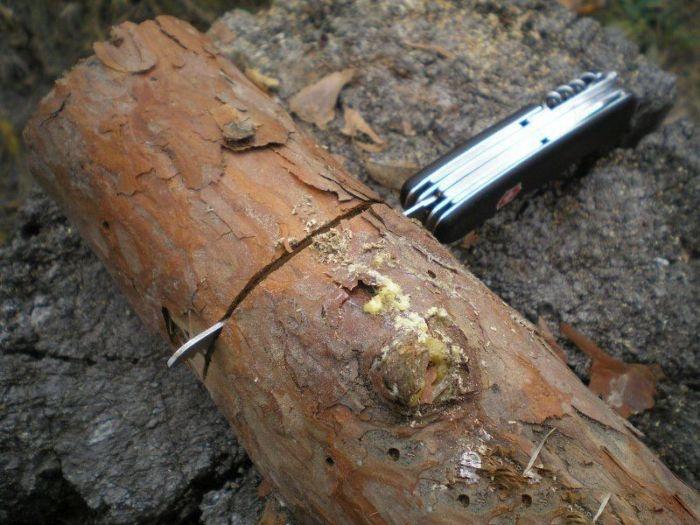 Деревянный примус своими руками (12 фото)