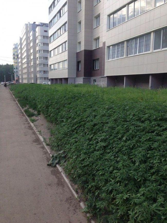 Посадили не ту траву возле дома (3 фото)