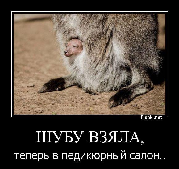 Демотиваторы (43 фото) 21.06.2014