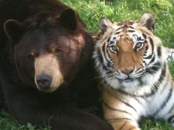Необычная дружба хищников