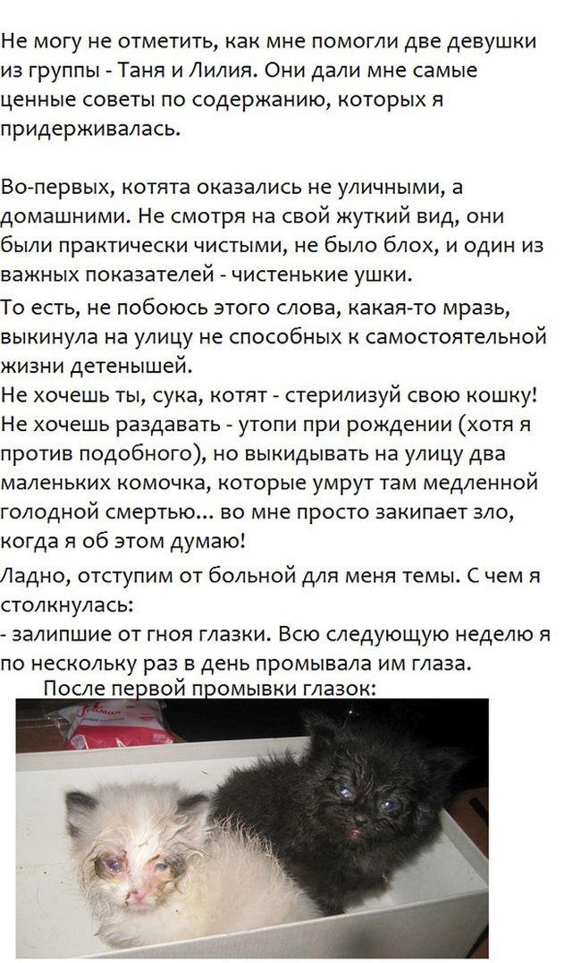 История спасение бездомных котят